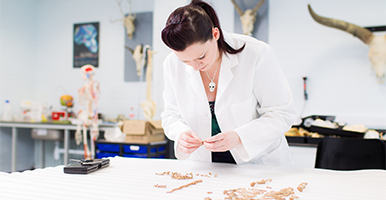 Woman wearing a lab coat examining a number of bones.