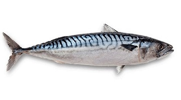 English all at sea over fish identification - try our 'Name That Tuna' quiz