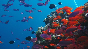 Molecular 'track-and-trace' of ocean life outperforms traditional fish and marine surveys