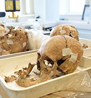 Skulls - School of Biological and Environmental Sciences research
