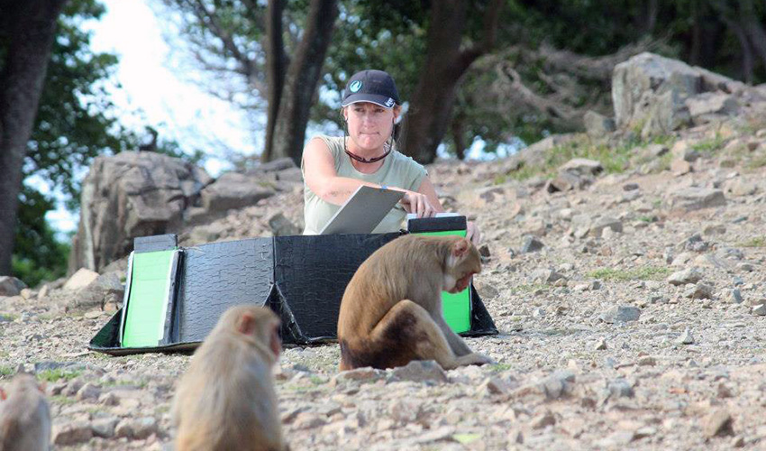 Studying macaques