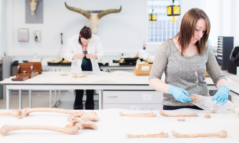 Forensic Anthropology lab